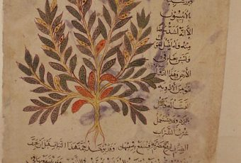 The Importance of Plants in Islamic Culture